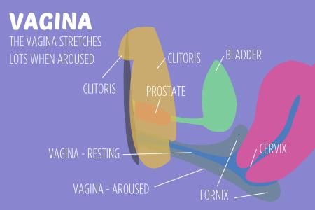 Sexual body parts VAGINA